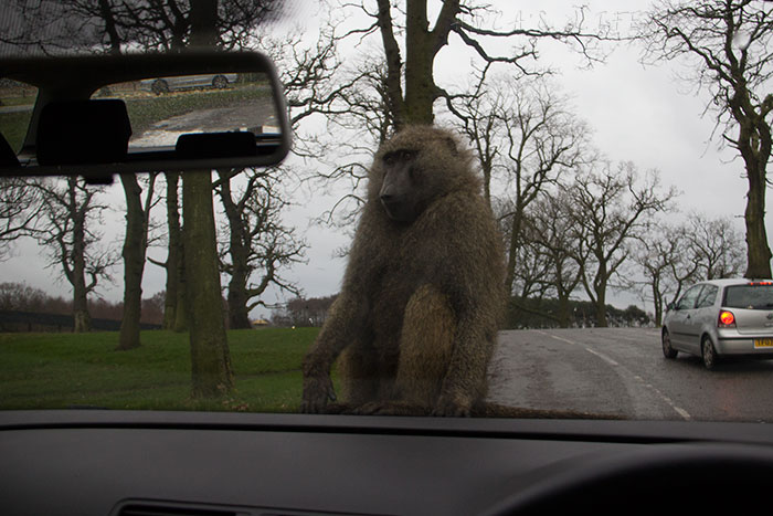 09 Knowsley Safari Park in December