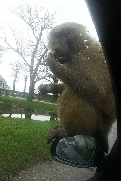 10 Knowsley Safari Park in December