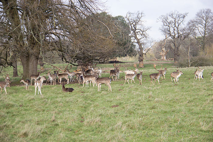12 Charlecote Park