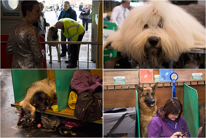 Dog-benches-Crufts-02