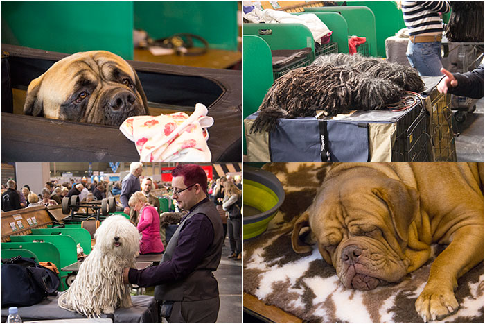 Dog-benches-Crufts-05