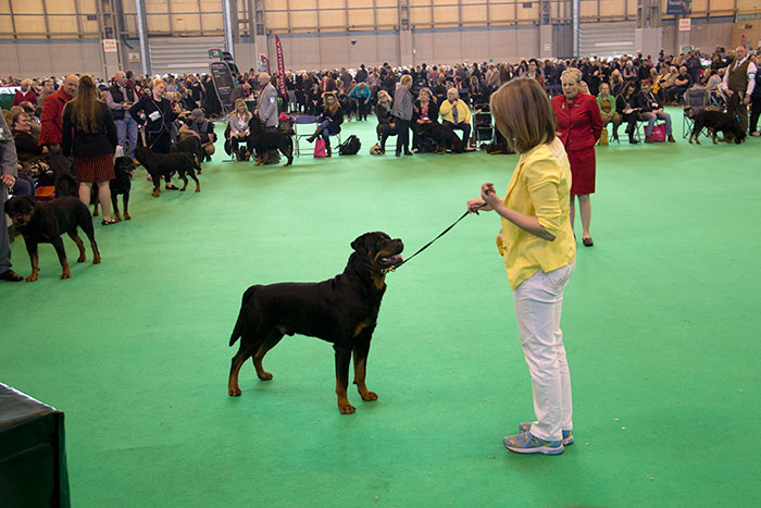 Dog-rings-Crufts-01