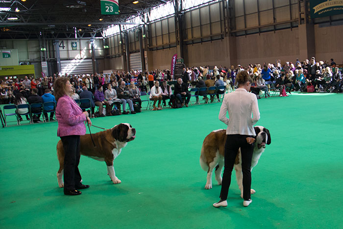 Dog-rings-Crufts-02