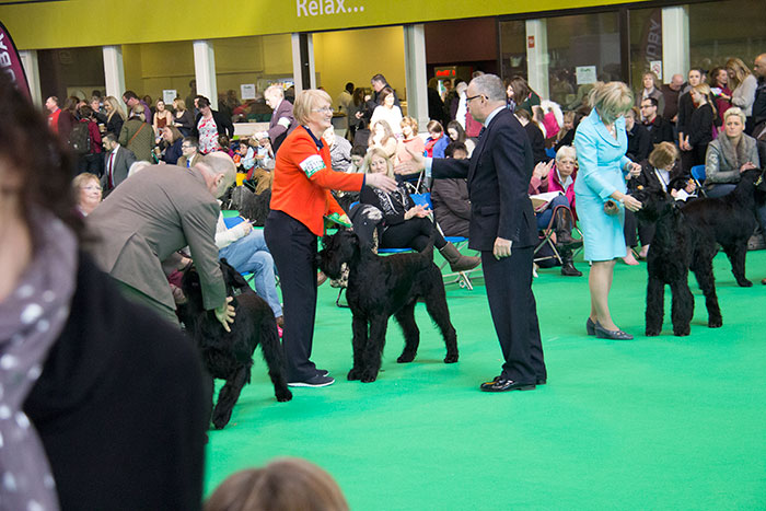 Dog-rings-Crufts-03