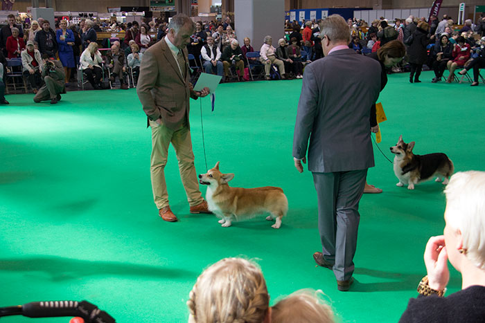 Dog-rings-Crufts-04