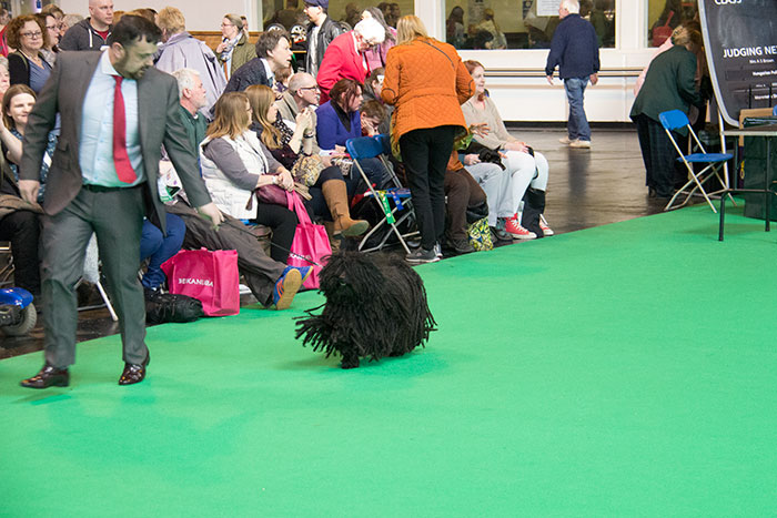 Dog-rings-Crufts-05