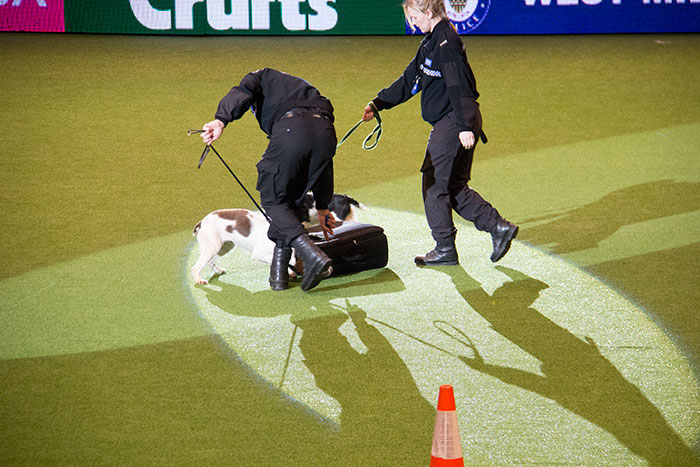 West-Midlands-Police-Crufts-02