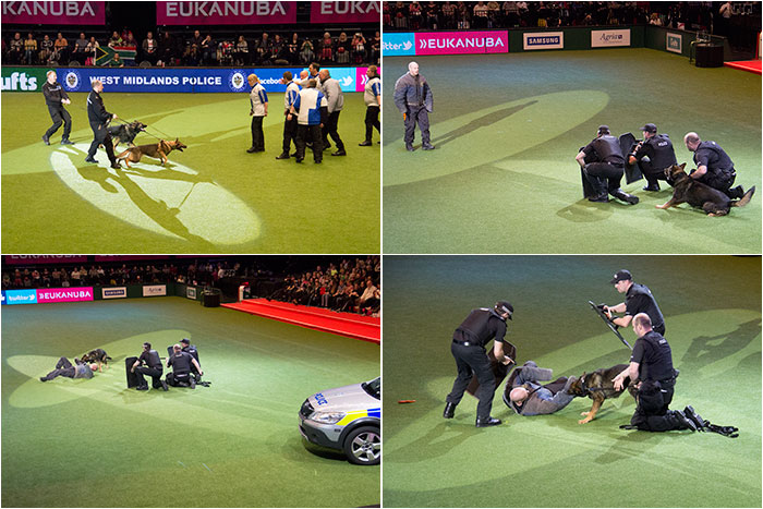 West-Midlands-Police-Crufts-03