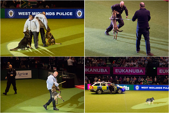 West-Midlands-Police-Crufts-04