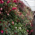 01 BBC Gardener's World Live