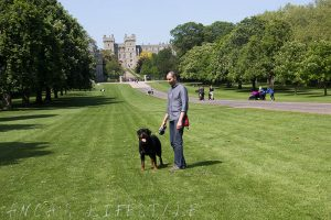 Walking the dog at Windsor