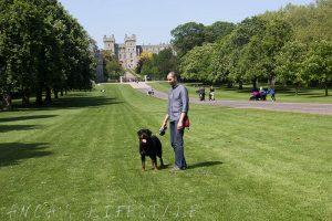 Walking the dog at Windsor