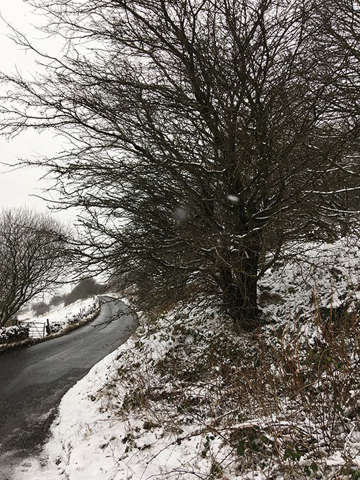 Trees filled with snow in Peak District
