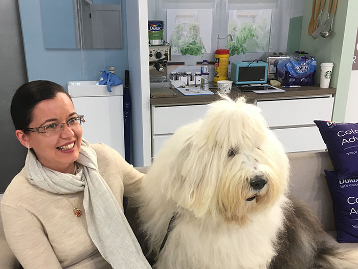 February roundup - Dulux Dog