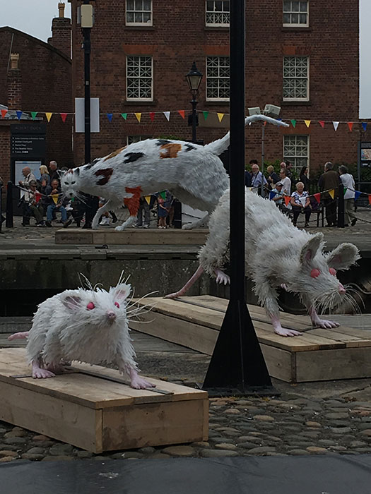Tall Ships Regatta. The Ship's Cat and Super Rat