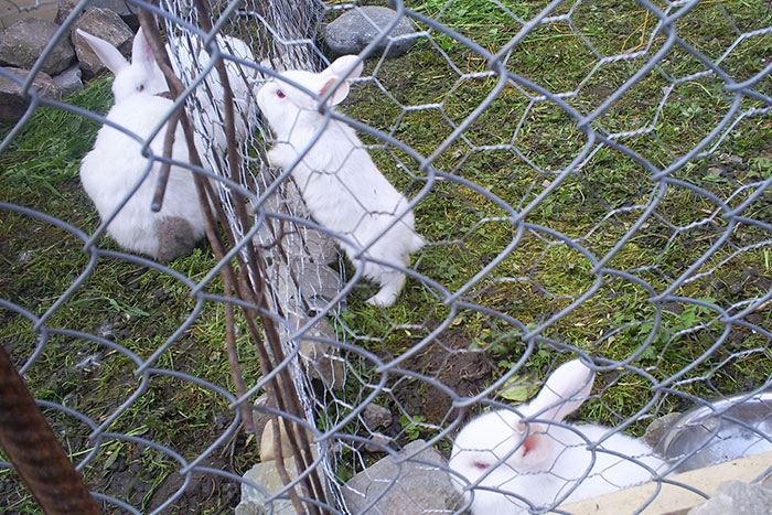 Bunnies at Comana Monastery