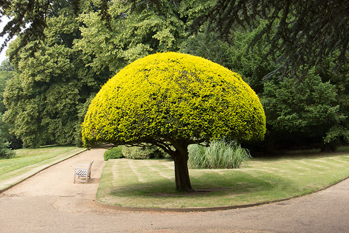 Tree in the gounds at Waddesdon Manor