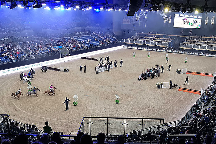 Liverpool International Horse Show. Shetland ponies