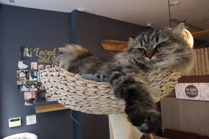 Cat Cafe Manchester. Part of my Manchester Day Trip. Cat sleeping