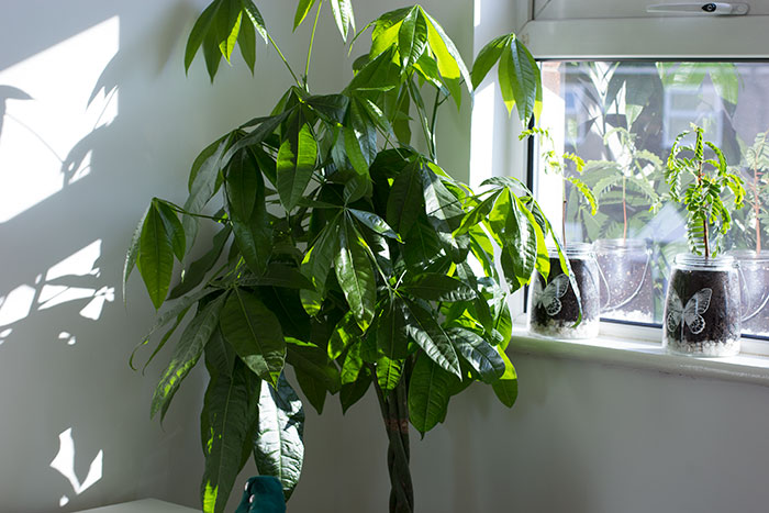 My Home Office - Plants on the window sill