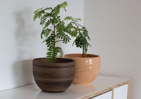 Choosing Plant Pots