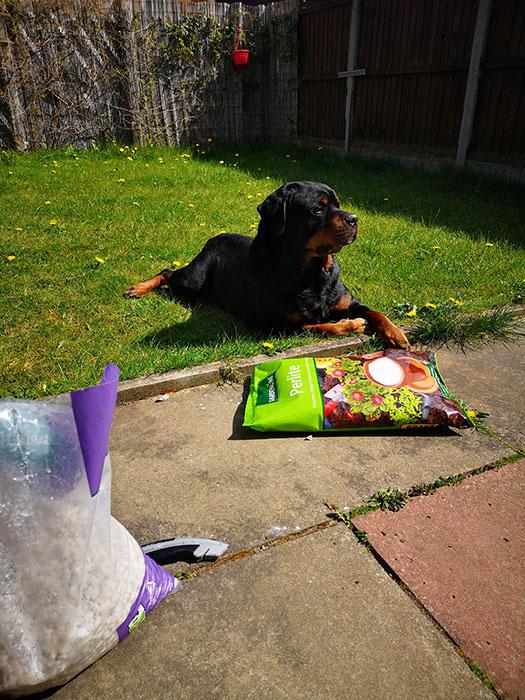 Festus in the garden