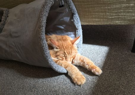 Cat sleeping at Cat Café Liverpool