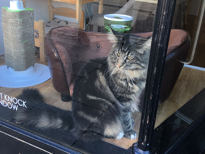 Cat in the window at Cat Café Liverpool