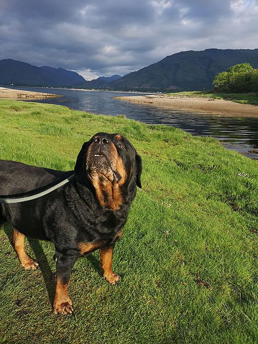 dog near loch