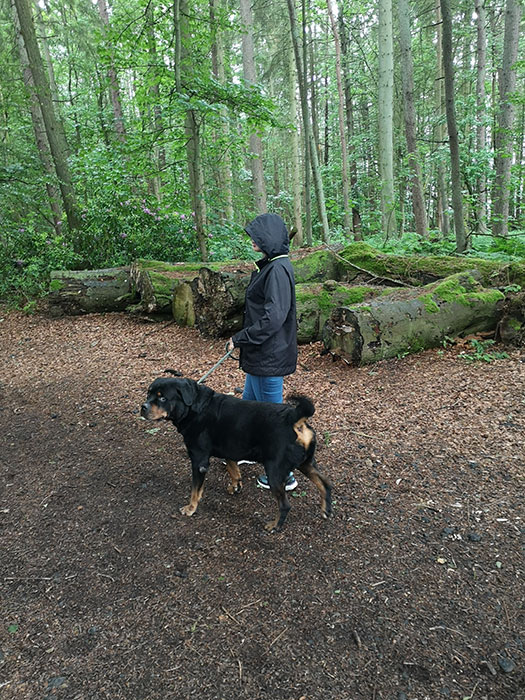 dog and owner in the forest
