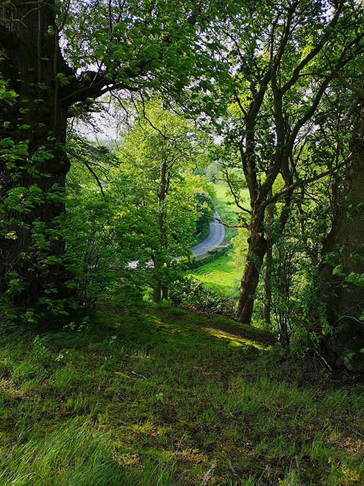Markinch, walk in the woods