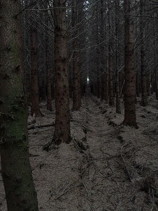 Highland Titles Nature Reserve. Dark forest