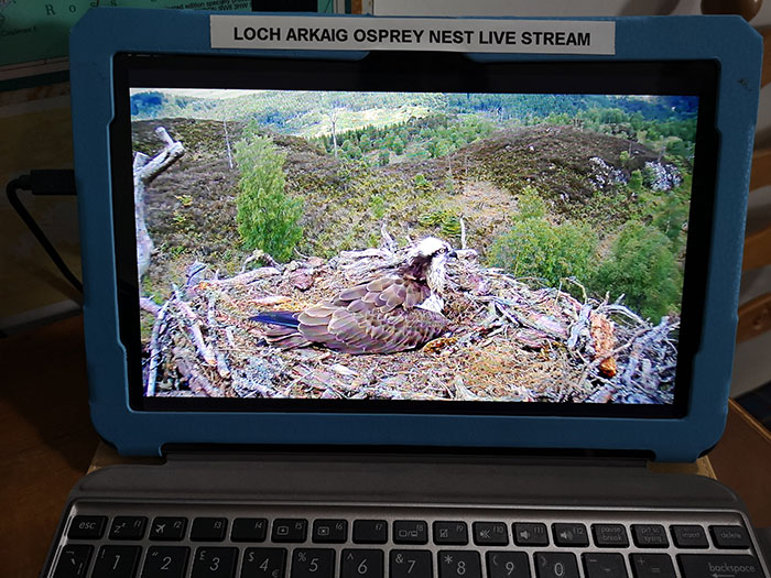 Osprey webcam at Clan Cameron Museum
