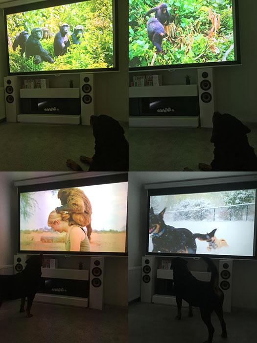 Festus watching TV