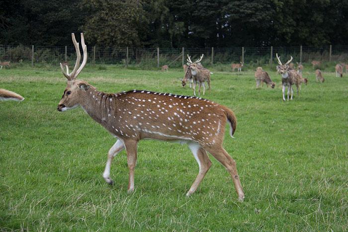 Deer in the safari park