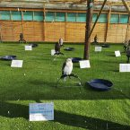Wild Wings. Bird of Prey Centre