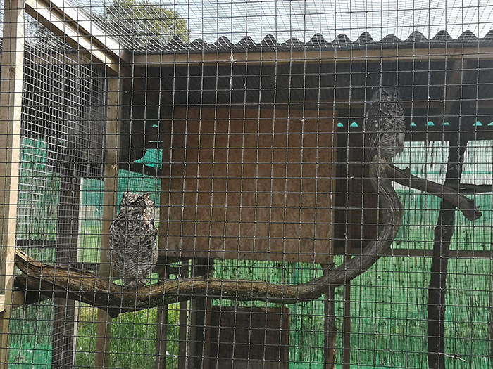 Wild Wings. Bird of Prey Centre. African spotted Eagle Owls