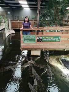 Crocodiles Feeding experience at Crocodiles of the World