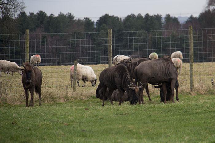 Animals and livestock