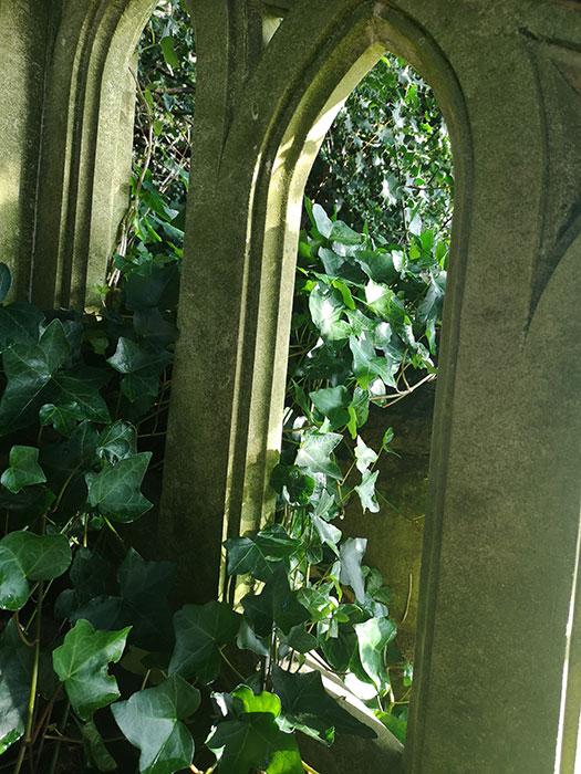 Ivy in window