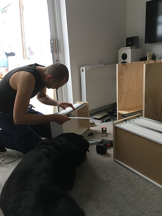 Dog and DIY