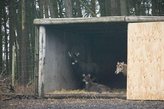 Animals taking shelter