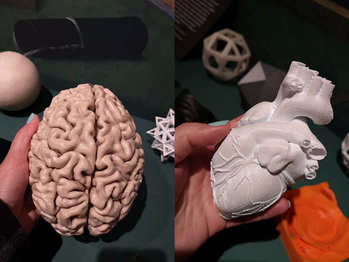 3D model of brain and heart