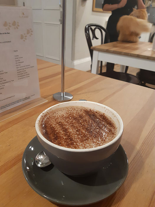 Hot chocolate at Cat Cafe