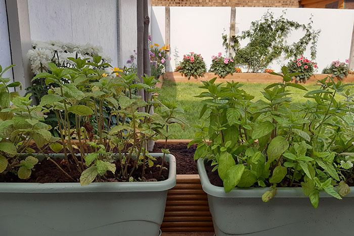 Cuprinol Garden Shades - on plastic