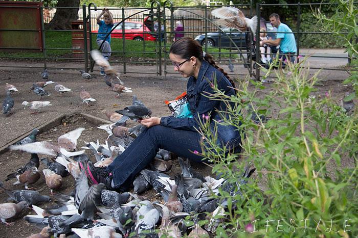 feeding pigeons 08