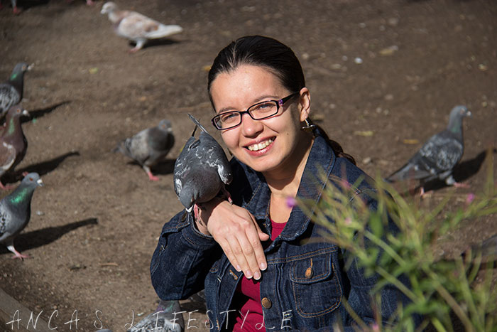 feeding pigeons 12