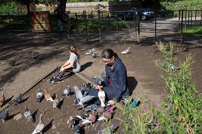 feeding pigeons 21