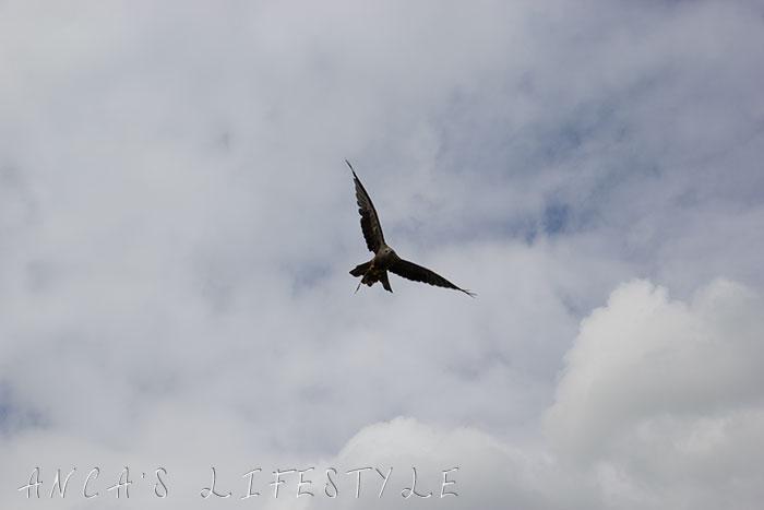 kite display