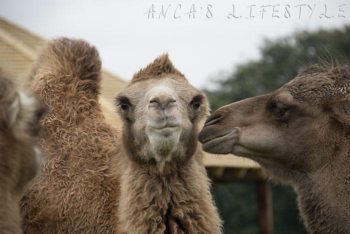 knowsley safari park 01